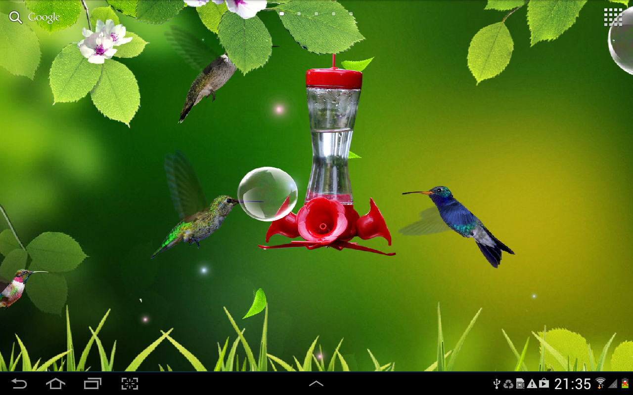 Hummingbird Wallpapers New