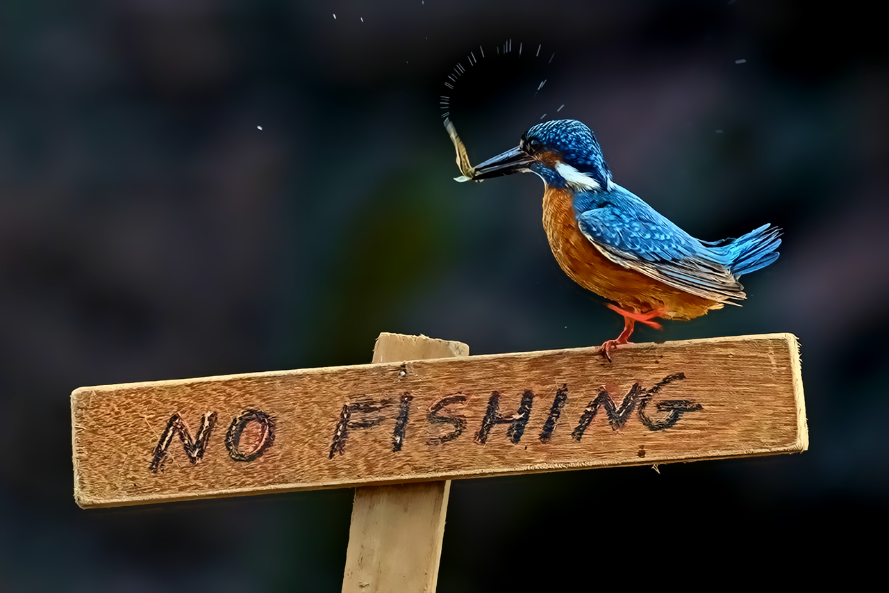 4:3 PSR.9292 Kingfisher Wallpapers