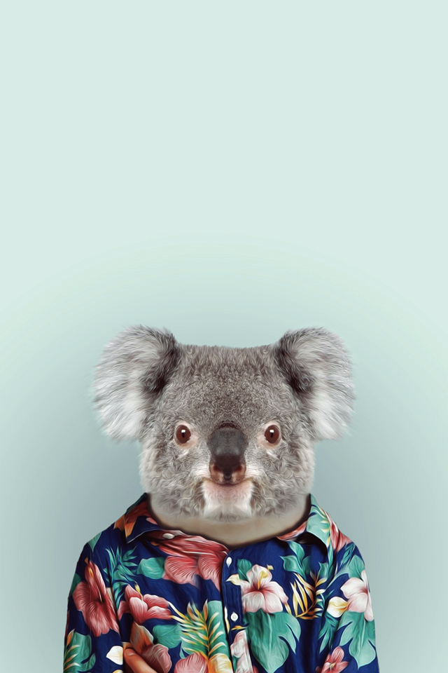Koala Wallpapers in Best 640x960 px Resolutions | Sheba Hamilton BsnSCB Graphics