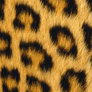 Awesome Leopard Print Pics | Leopard Print Wallpapers