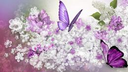Widescreen Wallpapers of Lilac » Top Backgrounds