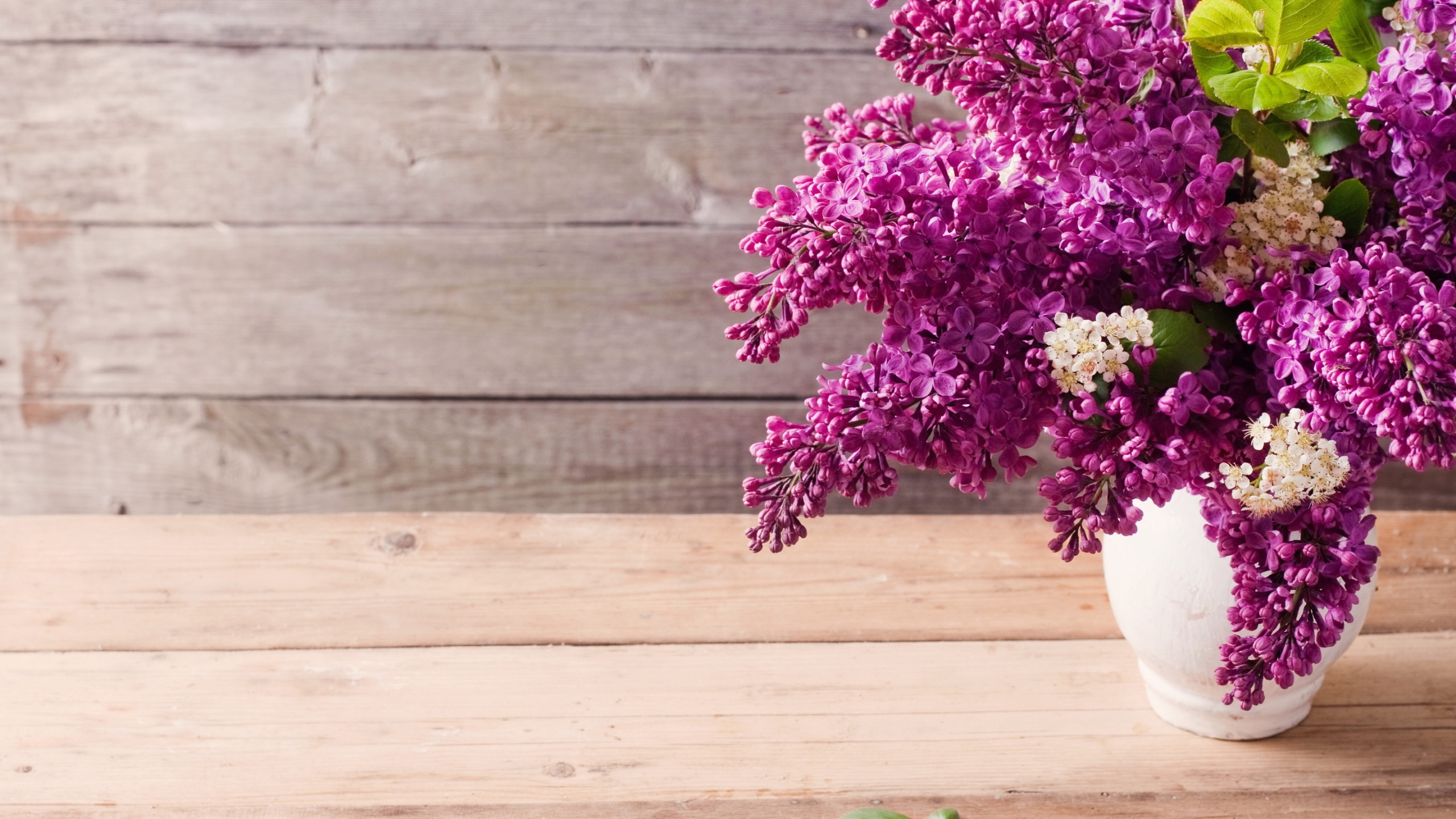 Best Lilac Flowers 2560x1440 Wallpaper by Ivan Carle