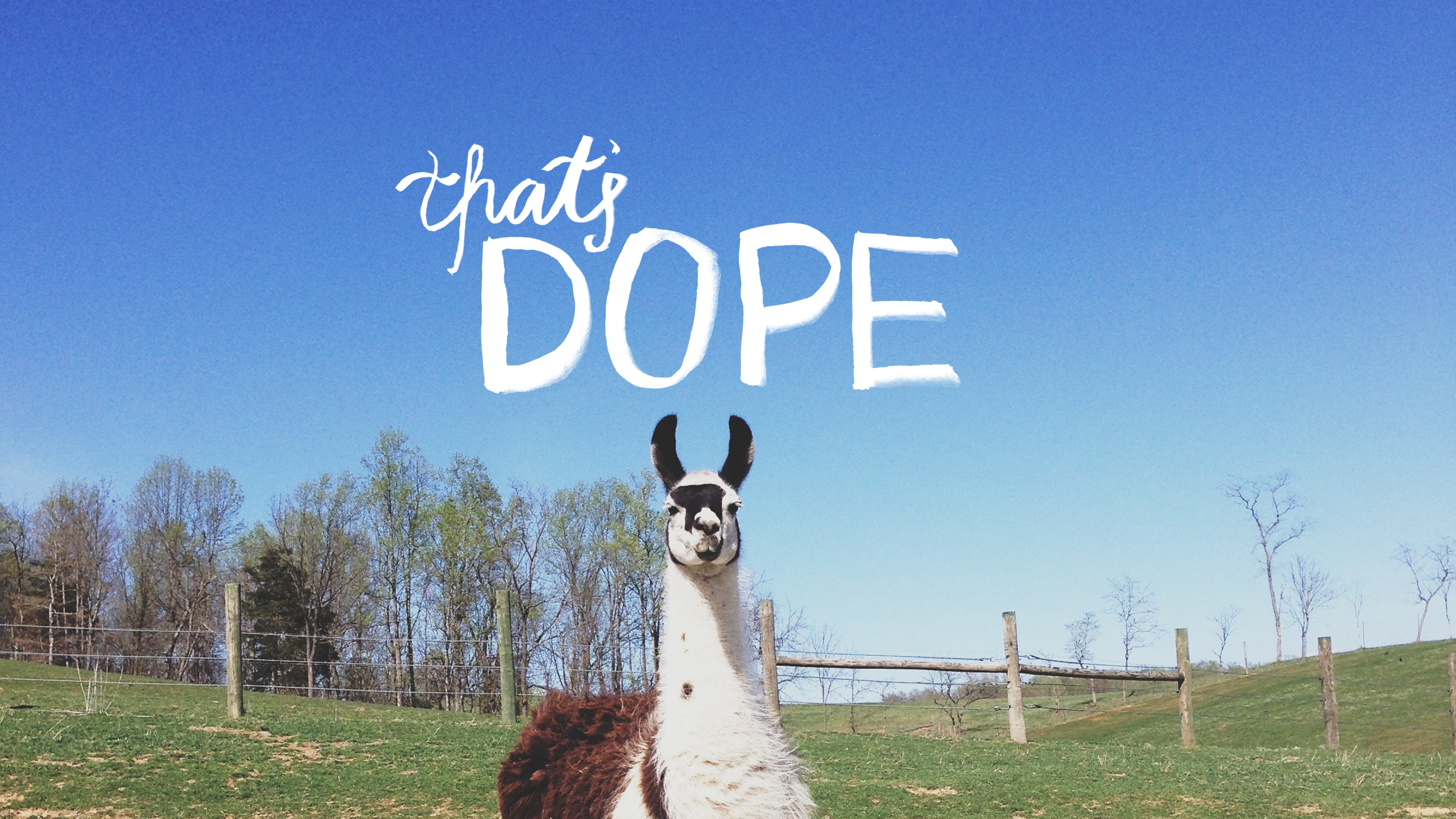 Interesting Llama HDQ Images Collection: 39994914, 2560x1440 px