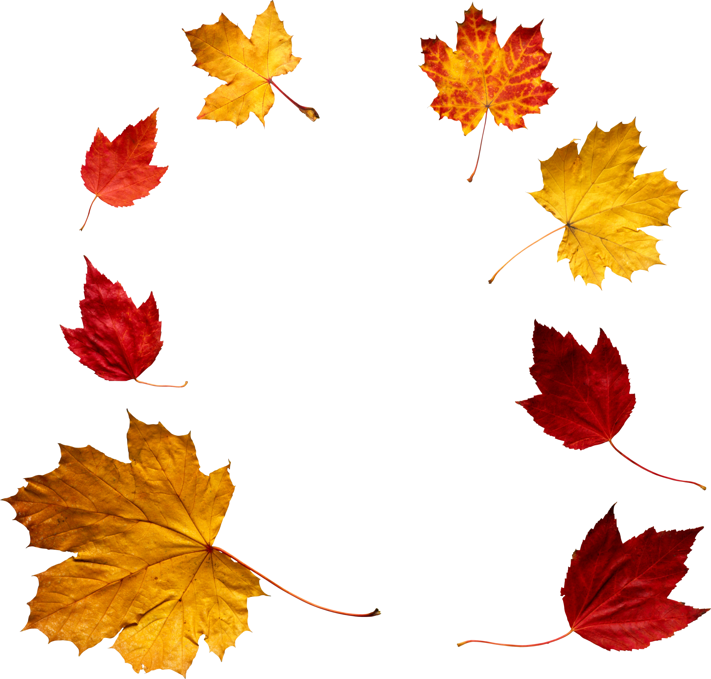 Autumn Leaves Pictures (2889x2759, WNP4343)