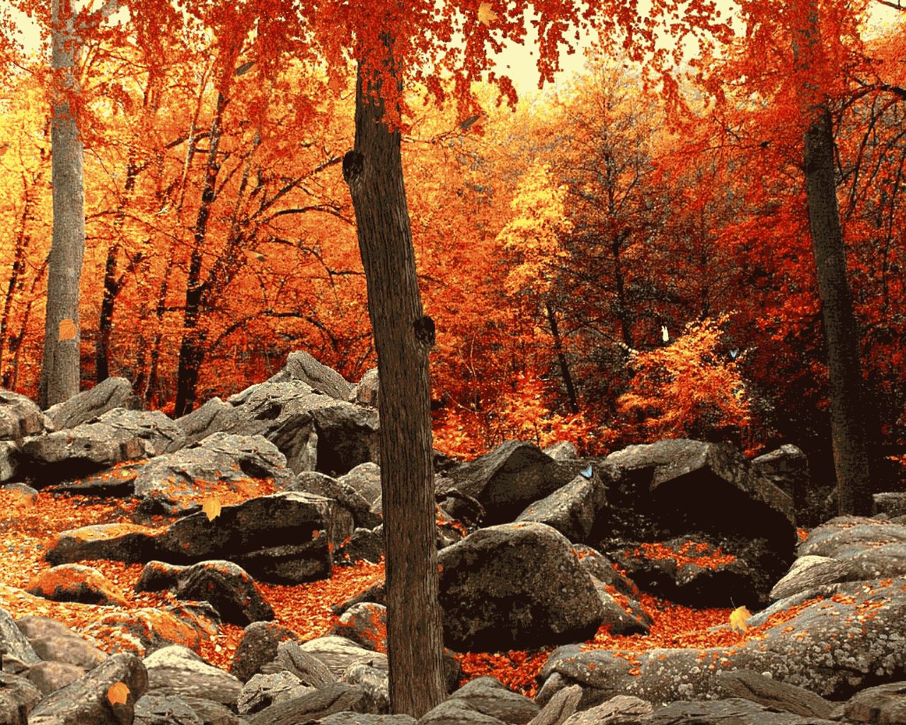 Beautiful Autumn Wood Wallpaper | B.SCB WP&BG Collection