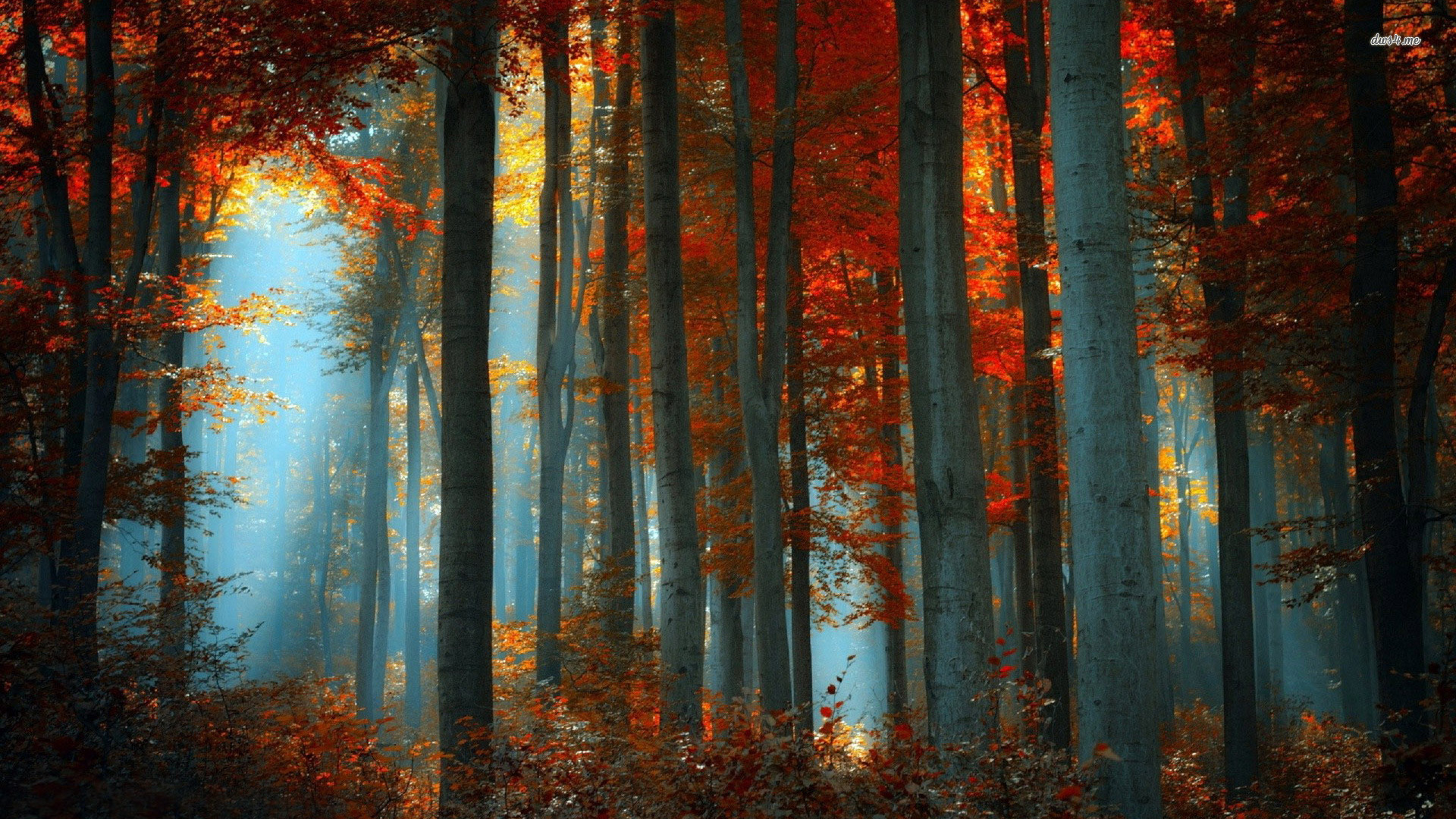 03/01/2015, Autumn Forest HQFX - Pack.78
