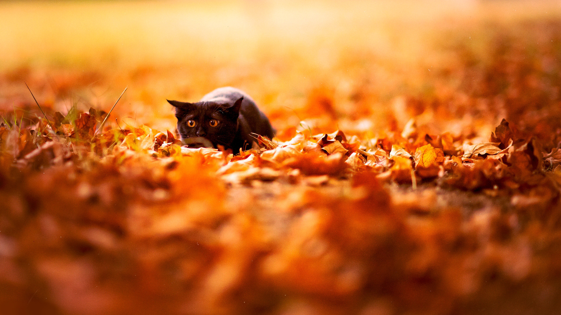 File: Autumn HD Quality.jpg | Ines Stine | 1920x1080