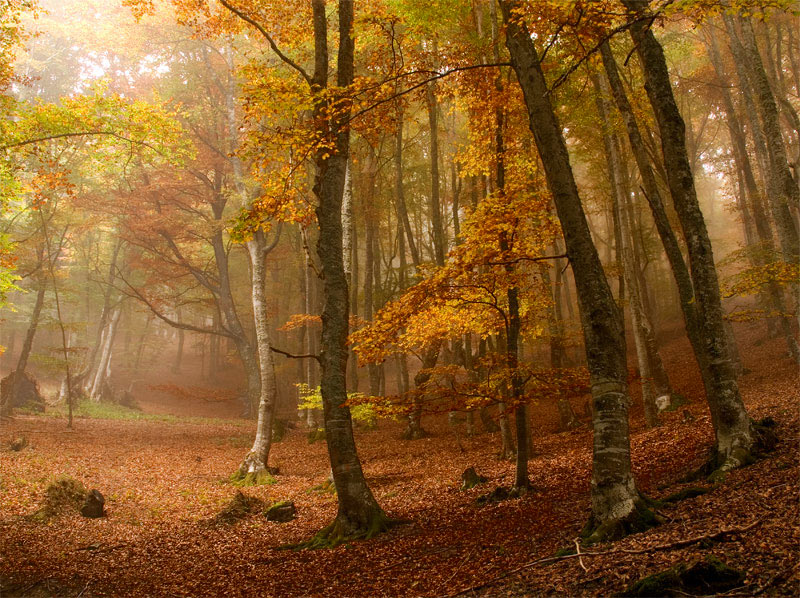 Autumn Forest-wallpaper-32.jpg