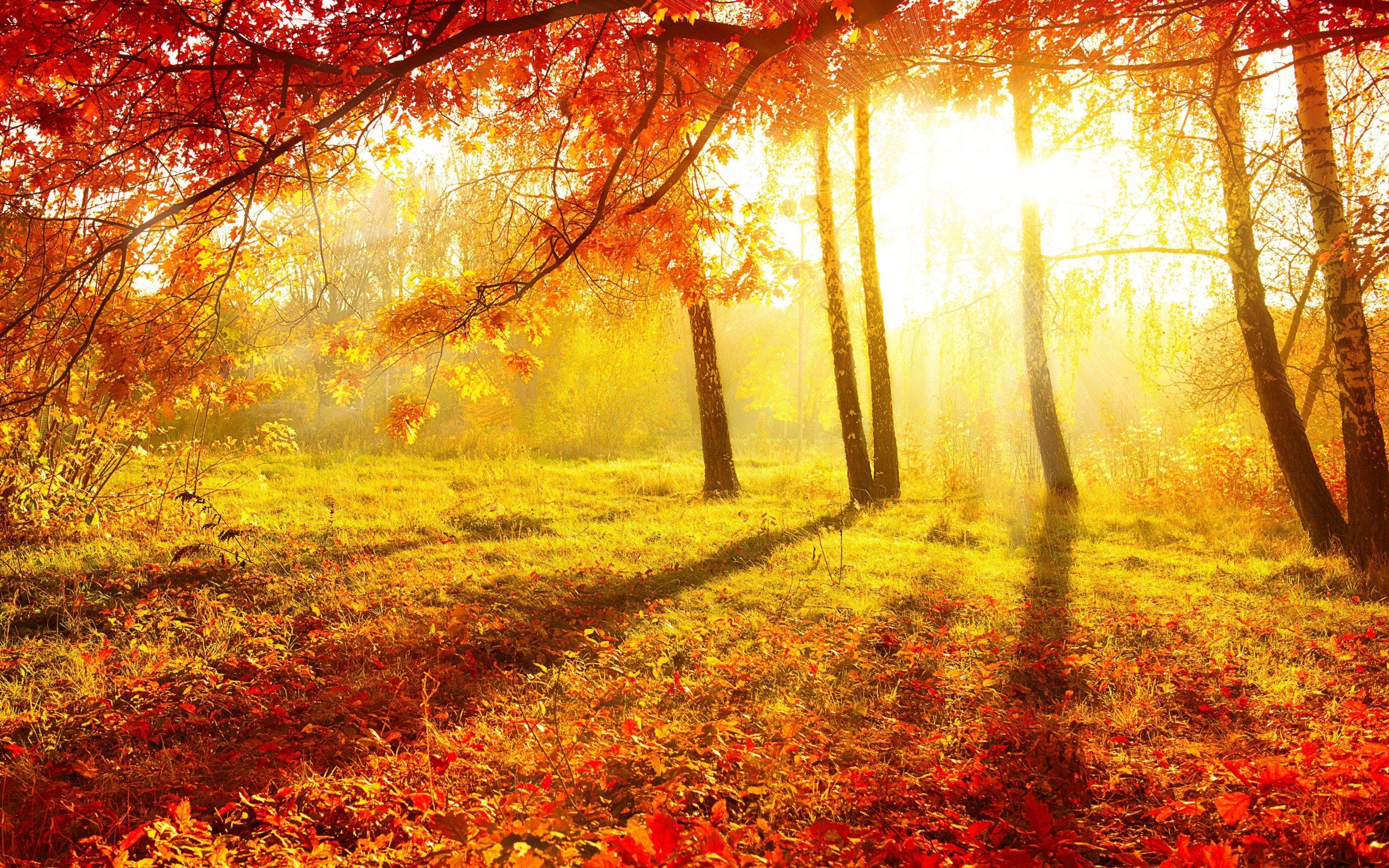 HQ Definition Autumn Forest Wallpapers, High Quality, BsnSCB