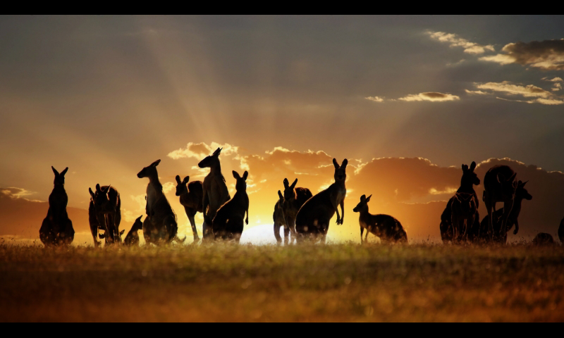 Australia Wallpaper by Veronica Belair, BsnSCB Gallery | Travel HDQ Cover