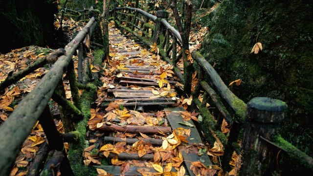 Autumn Wood Wallpapers in High Quality | 640x360, by Bernadine Bannon