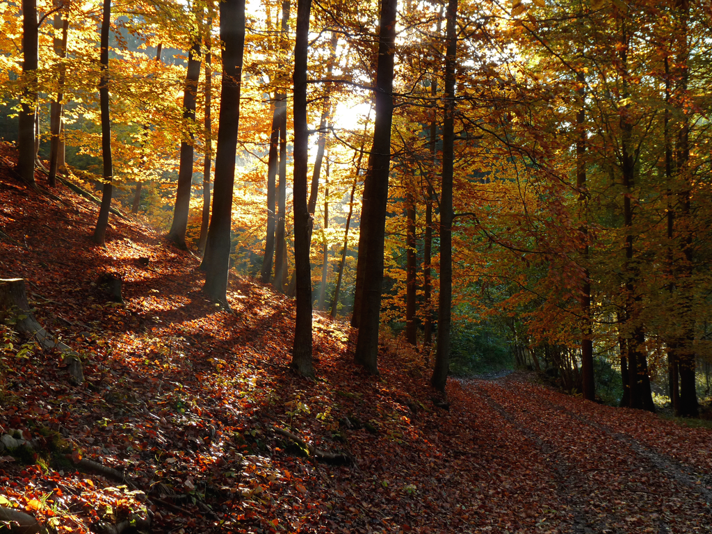 Autumn Forest Images (39410701) Free Download by Rhiannon Vitiello