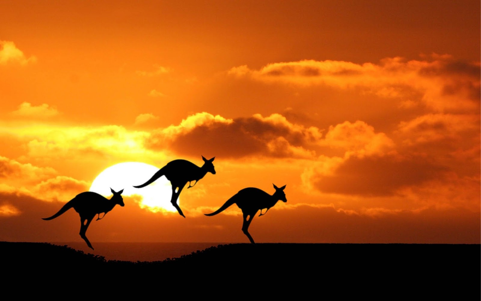 Australian Computer Wallpapers, Desktop Backgrounds
