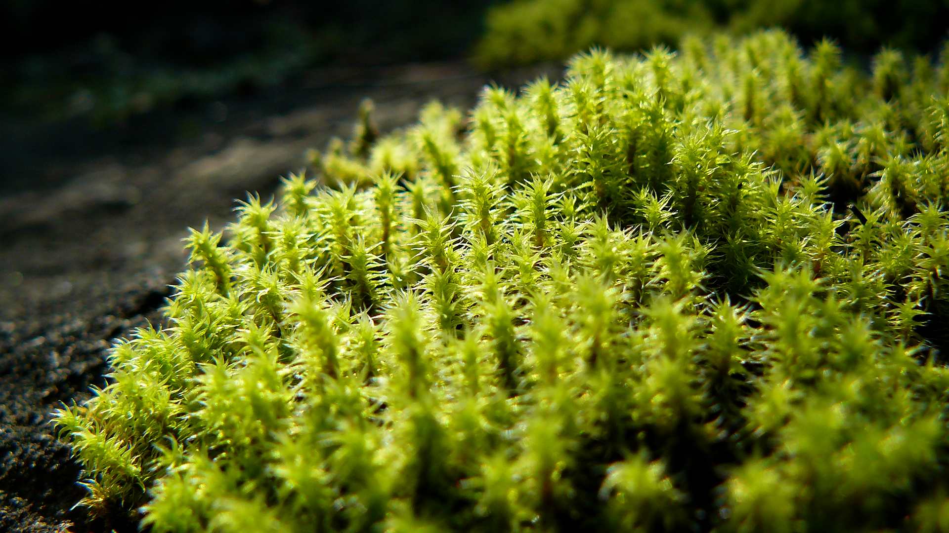 Moss 1920x1080, Top on B.SCB Wallpapers