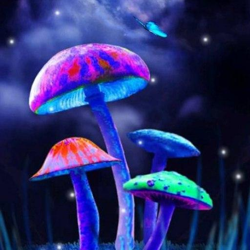 Full HD Pictures Mushrooms 512x512 px
