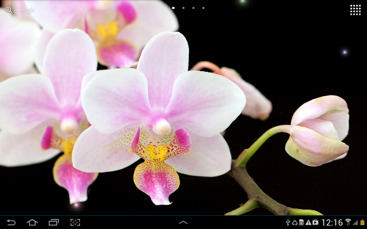Desktop Backgrounds: Orchids, by Stefany Mccrory, 1280x800 px