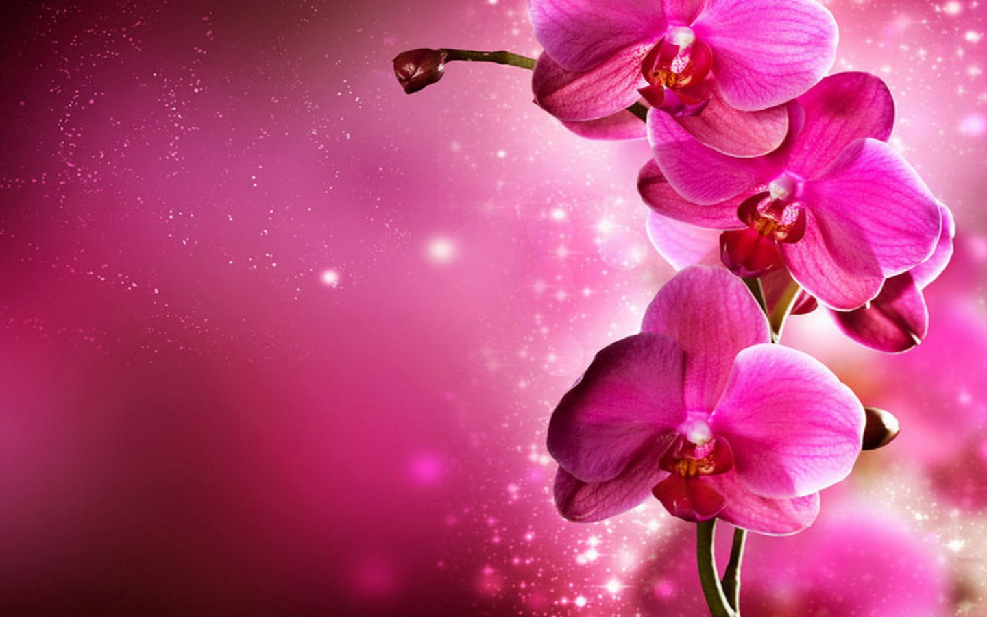 Download Orchid HD:4343-JYU Images, B.SCB WP&BG Collection