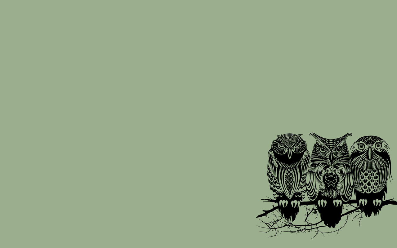 1280x800 Owl Desktop Photos