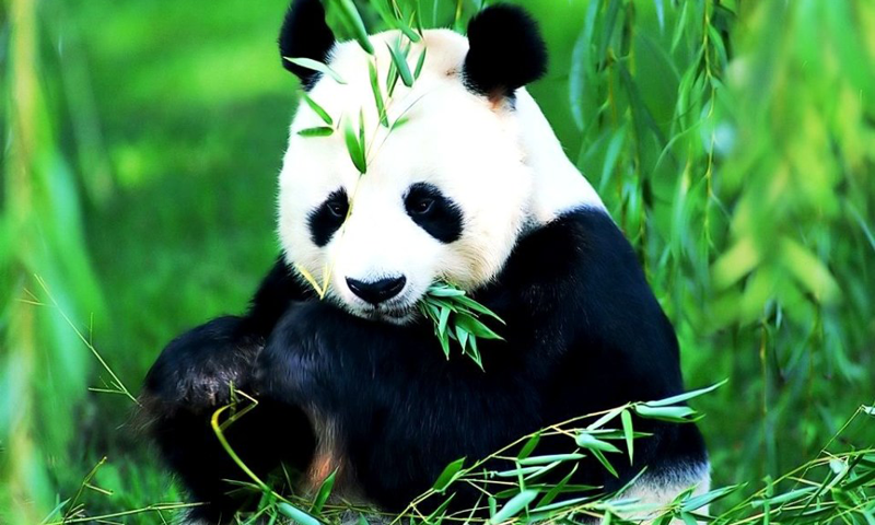 Backgrounds In High Quality: Pandas by Julieta Angelos, 09.29.15