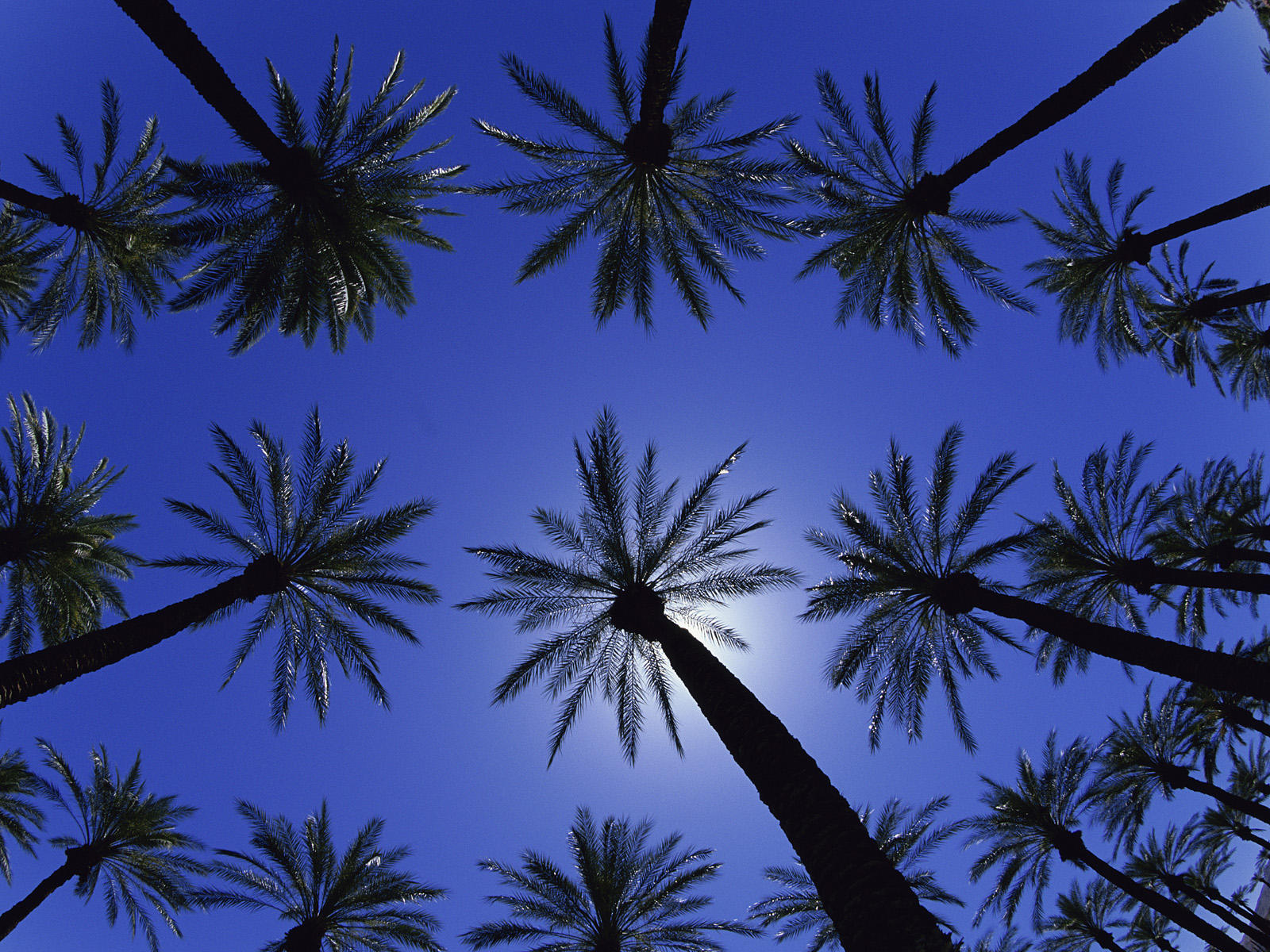 Palm Trees Wallpapers, High Resolution Pictures