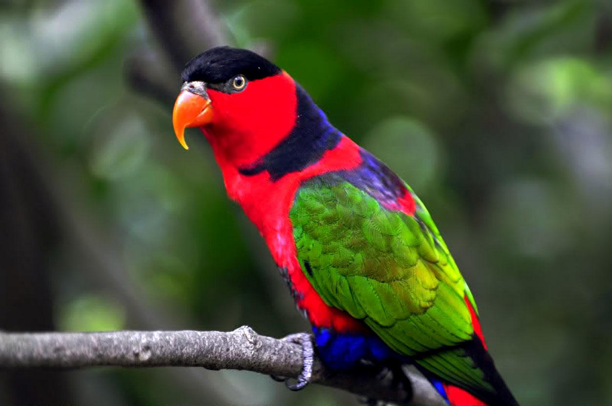 By Jaimee Herring PC.42: Parrots Wallpapers&Wallpapers