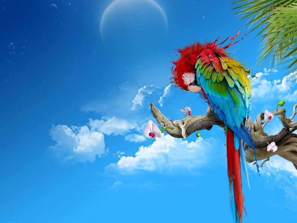New Parrots Backgrounds, View #39260094 Parrots Wallpapers