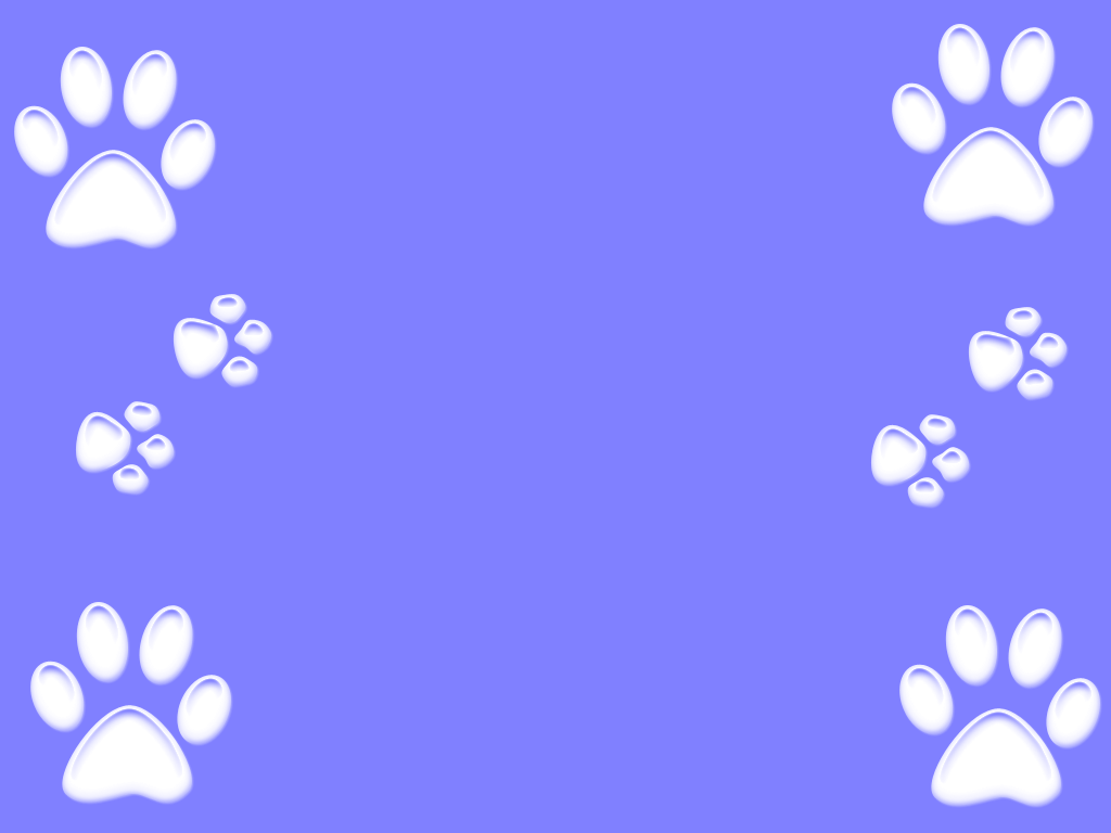 100% Quality HD Paw Wallpapers, High Quality, BsnSCB.com