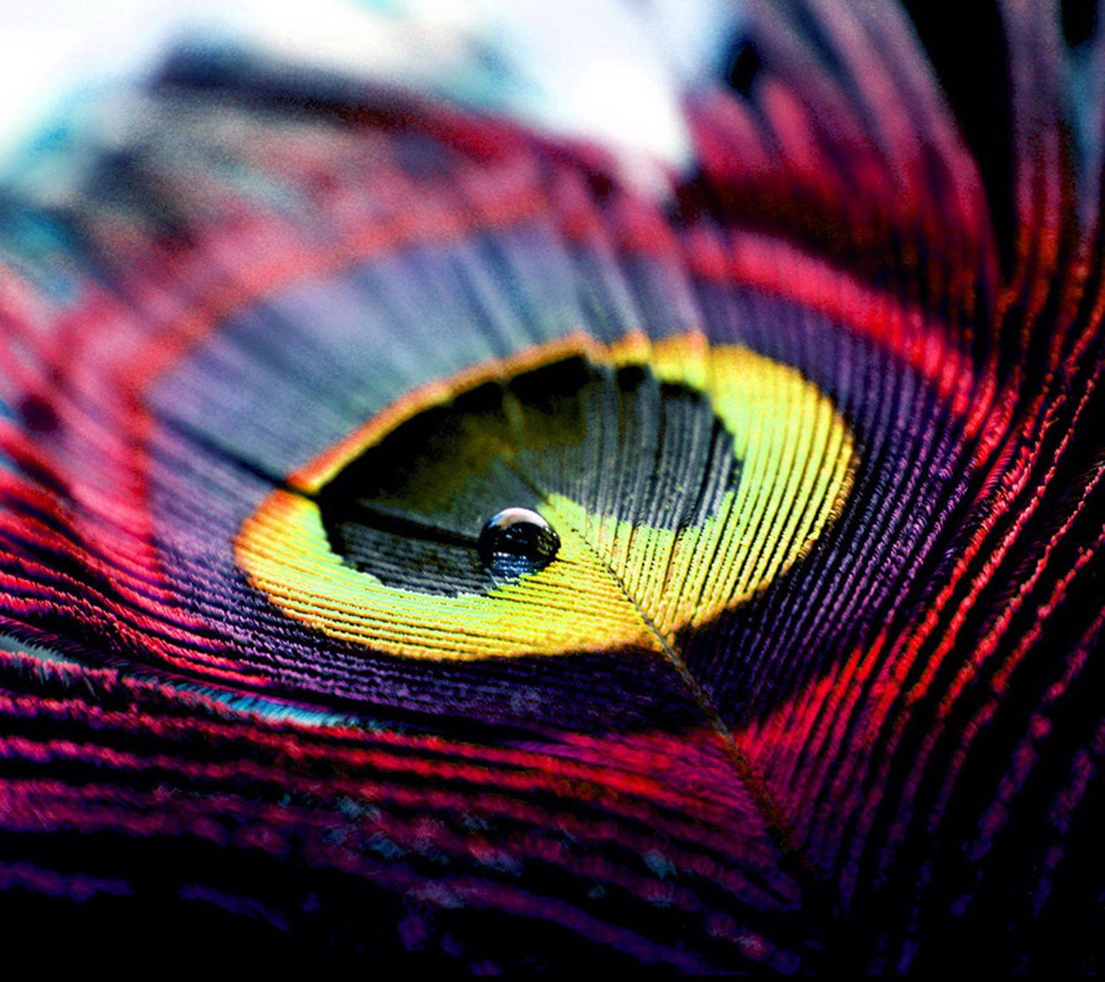 Peacock Feather Wallpapers | Top 92 Peacock Feather Wallpapers