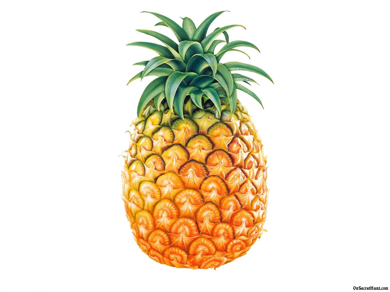 Download 1600x1200 px Pineapple HD Wallpapers for Free | BsnSCB