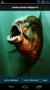 High Quality Piranha Wallpapers | Full HD Pictures