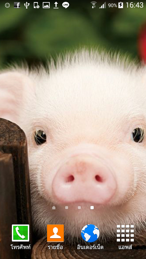 HD Pigs Wallpapers and Photos, 506x900 px | By Victorina Sapp