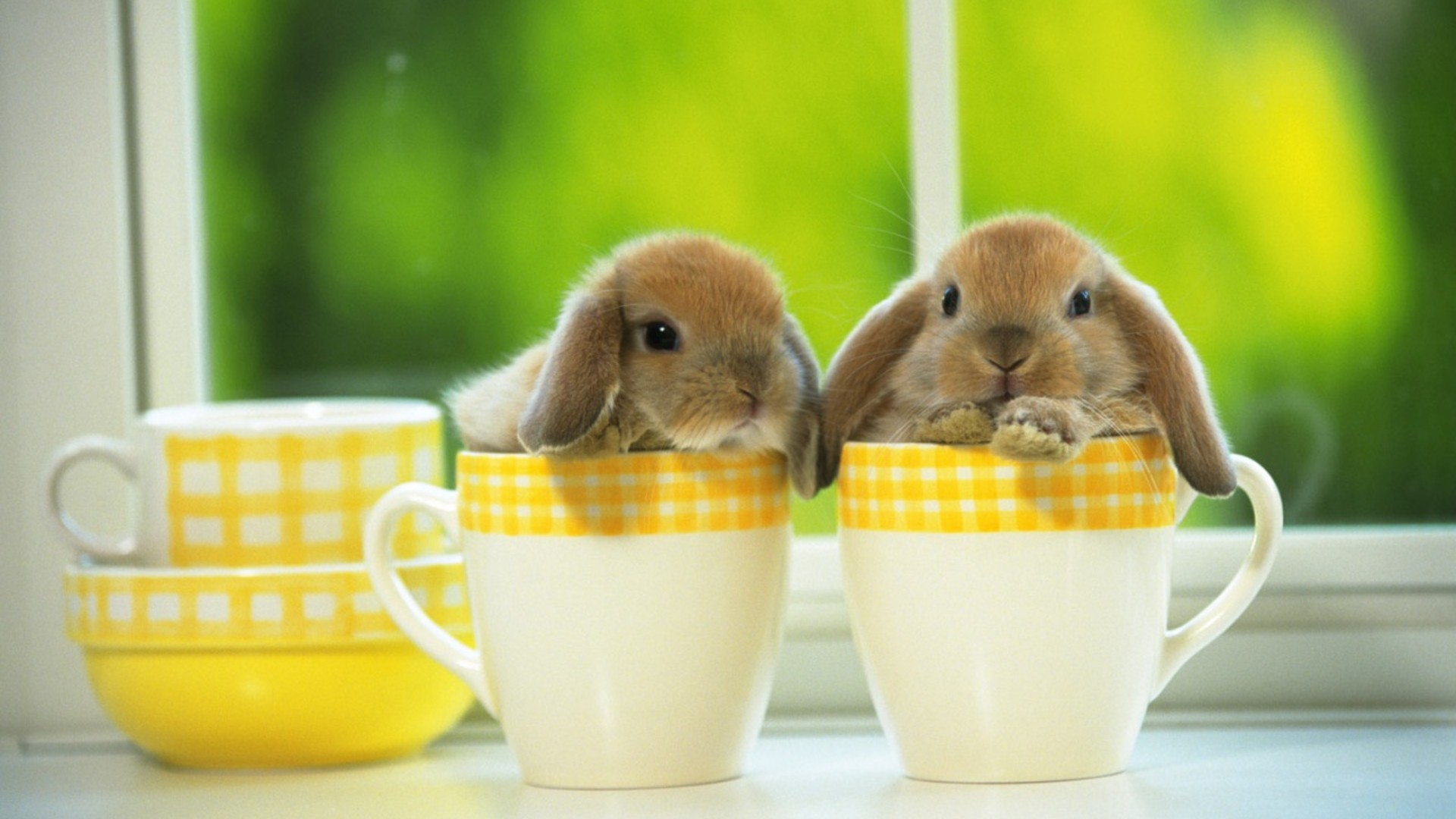PC.7676, Bunny Desktop HD Photo