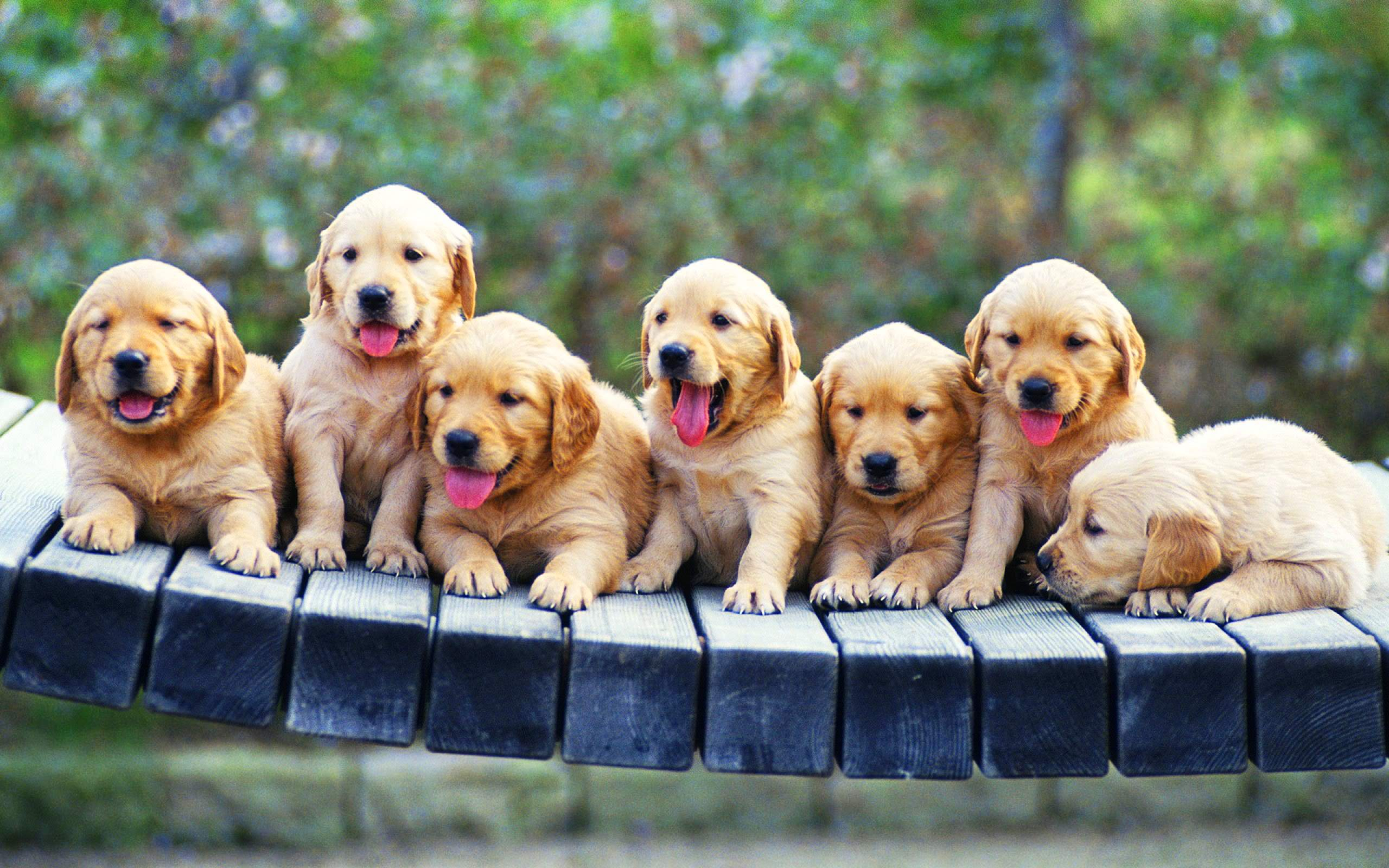 27363281 Puppy Wallpapers