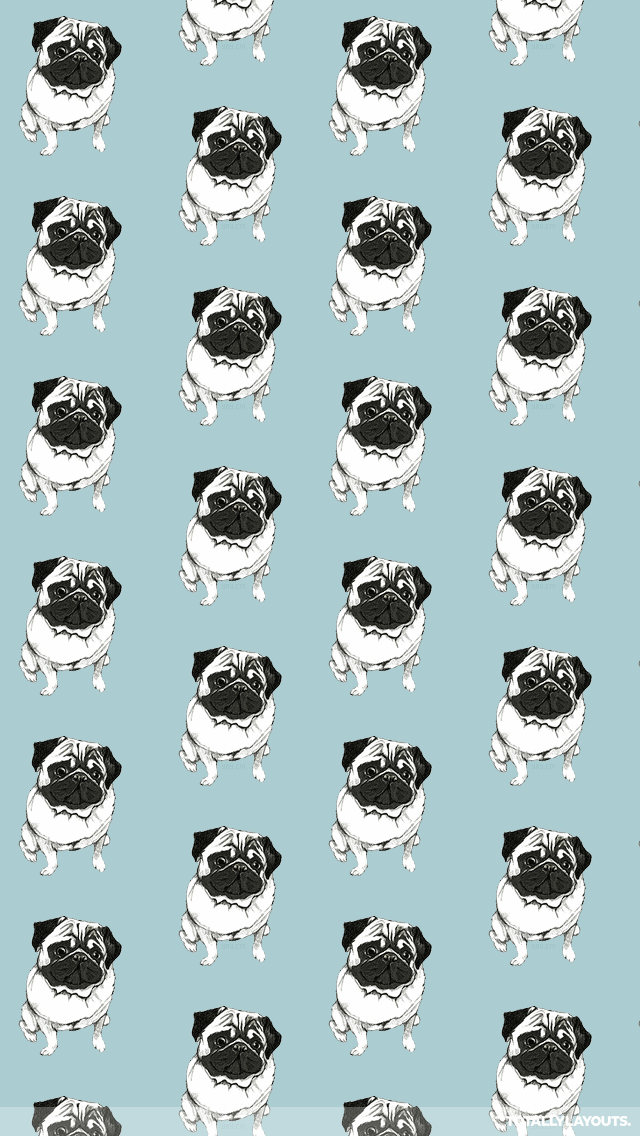 Pugs Images (38852324) Free Download by Petronila Norfleet