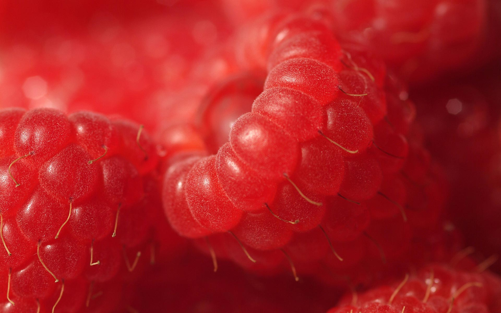 Raspberries - Live HD Raspberries Wallpapers, Photos
