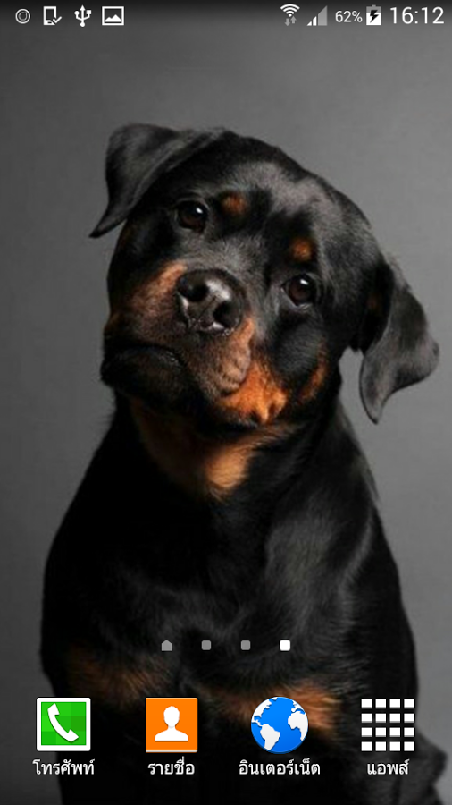 Awesome Rottweiler Pics | Rottweiler Wallpapers