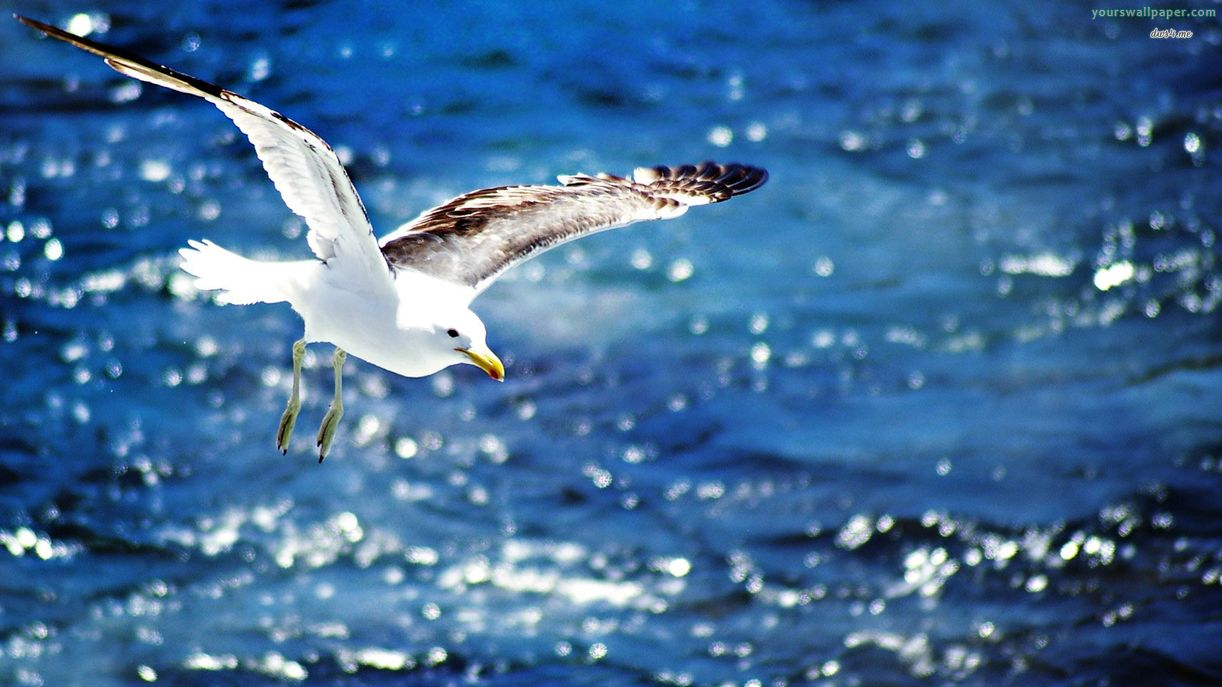 Photo Collection: CZN.58 Seagull, 04/02/2014