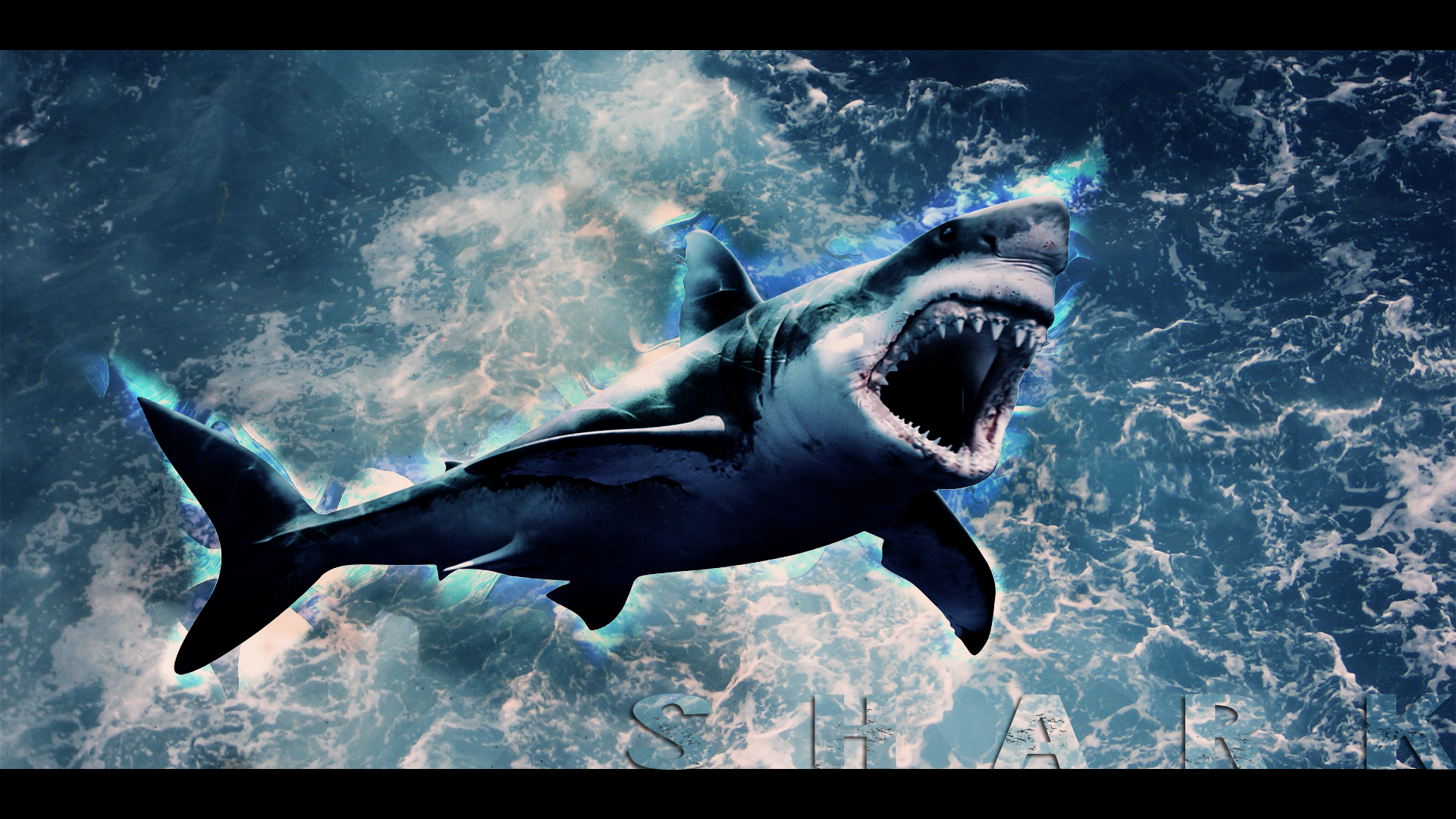01.07.15 Sharks | Resolution: 1920x1080, Josephina Winsett