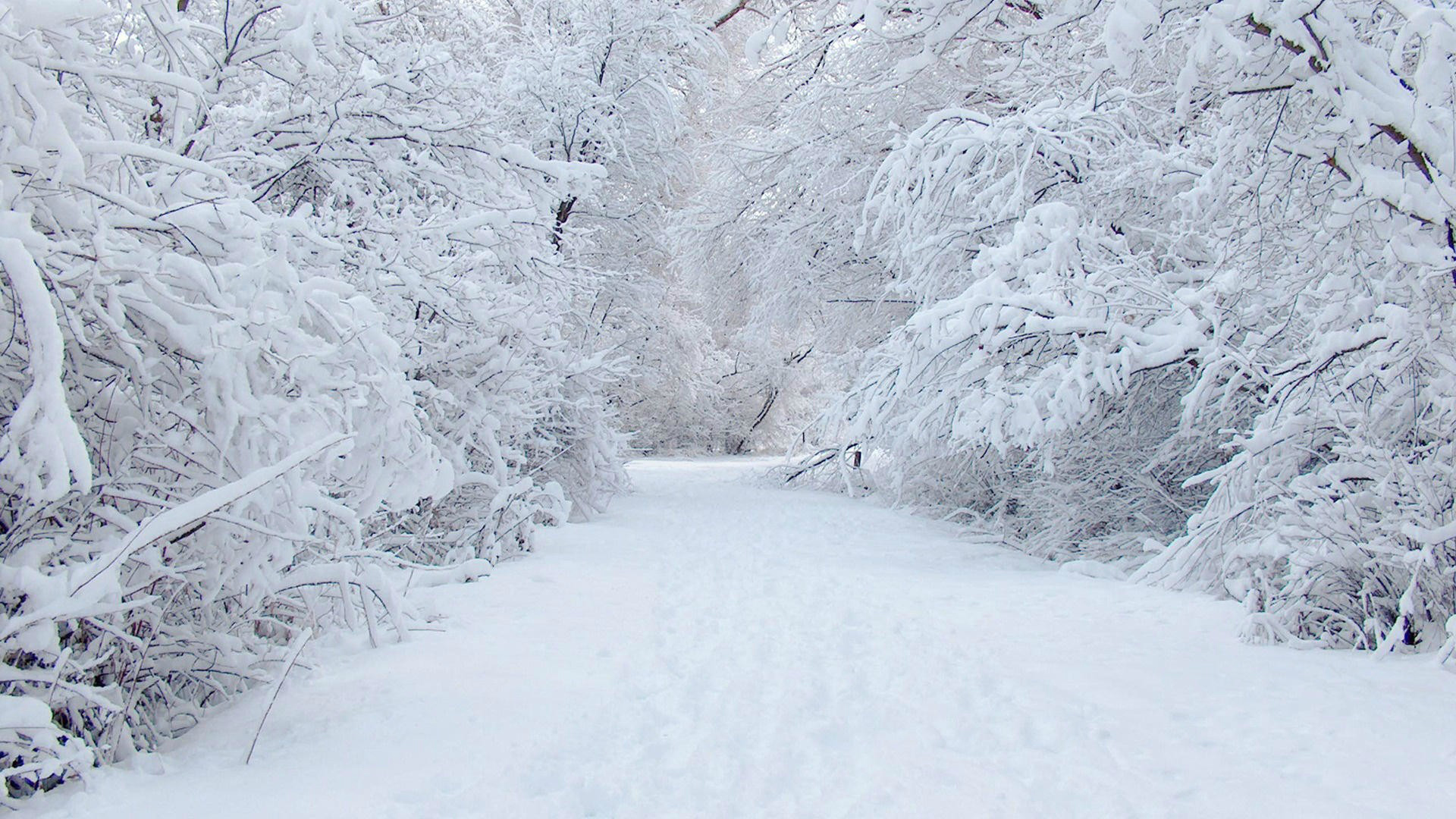 snow wallpapers for pc hvga 3 2 bte p 54 wallpapers
