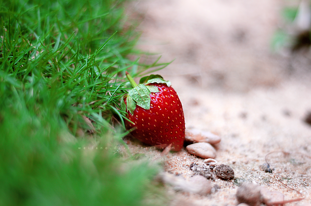 #38957216 Strawberry Wallpaper for PC, Mobile