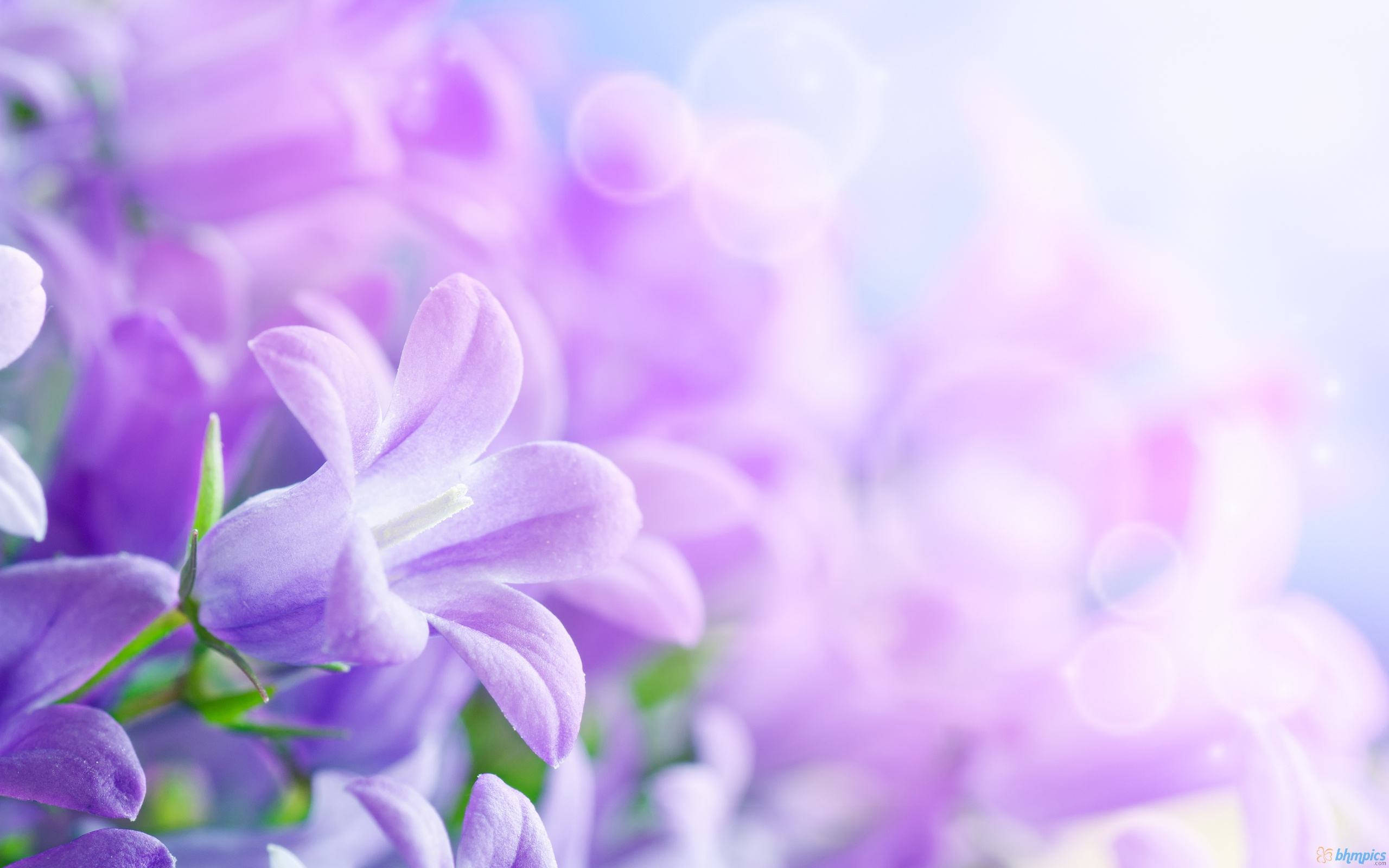 (2560x1600 px) - Stunning Flower Wallpapers, Shaquana Maley