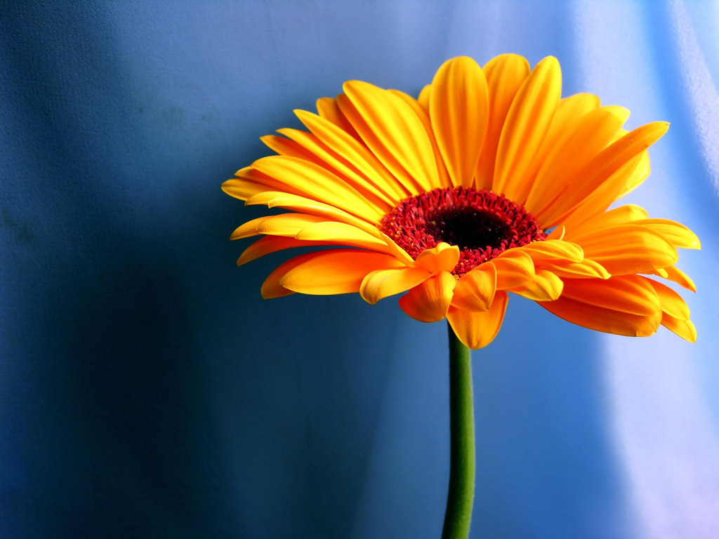 Mobile Compatible Sunflowers Wallpapers, Kaleigh Butterworth