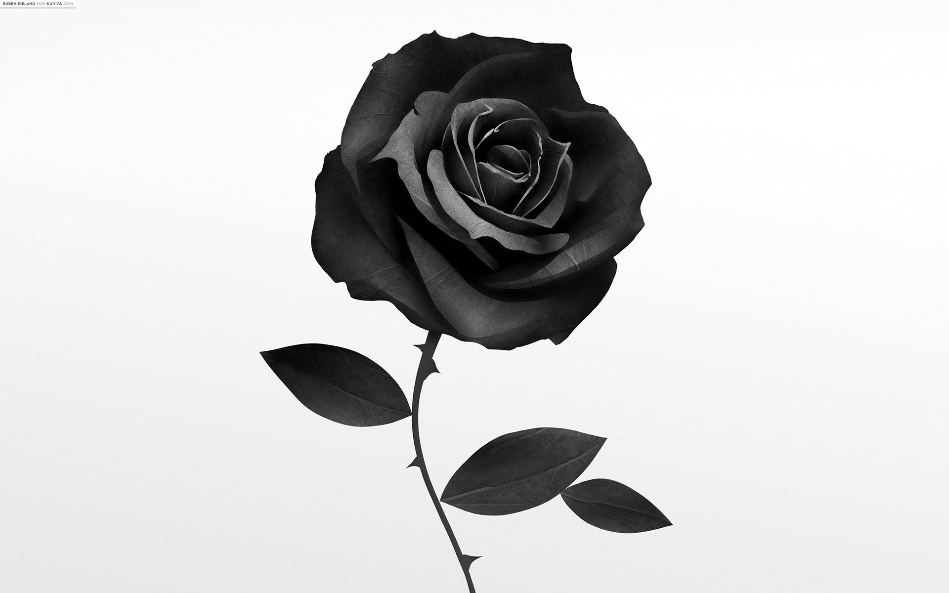 Wallpapers of Black Rose HD Quality