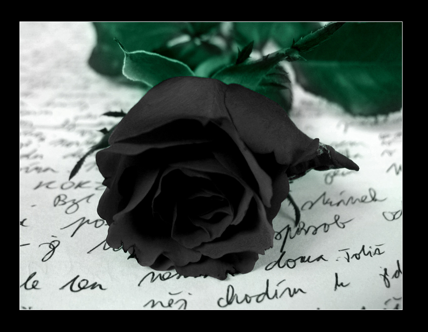 Black Rose 39800452 Wallpaper for Free | Amazing 100% Quality HD Pictures