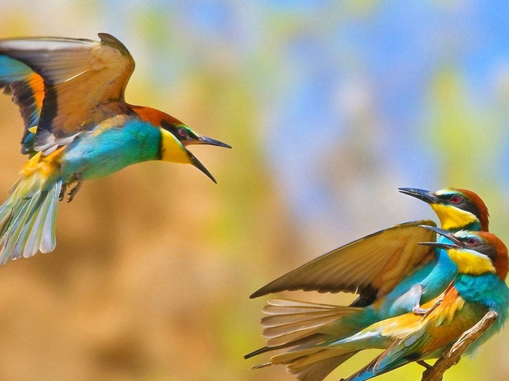 HD Widescreen Birds Wallpapers | Background ID:40045051