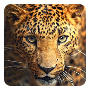 Wild Animal, High Resolution Wallpapers For Free | BsnSCB