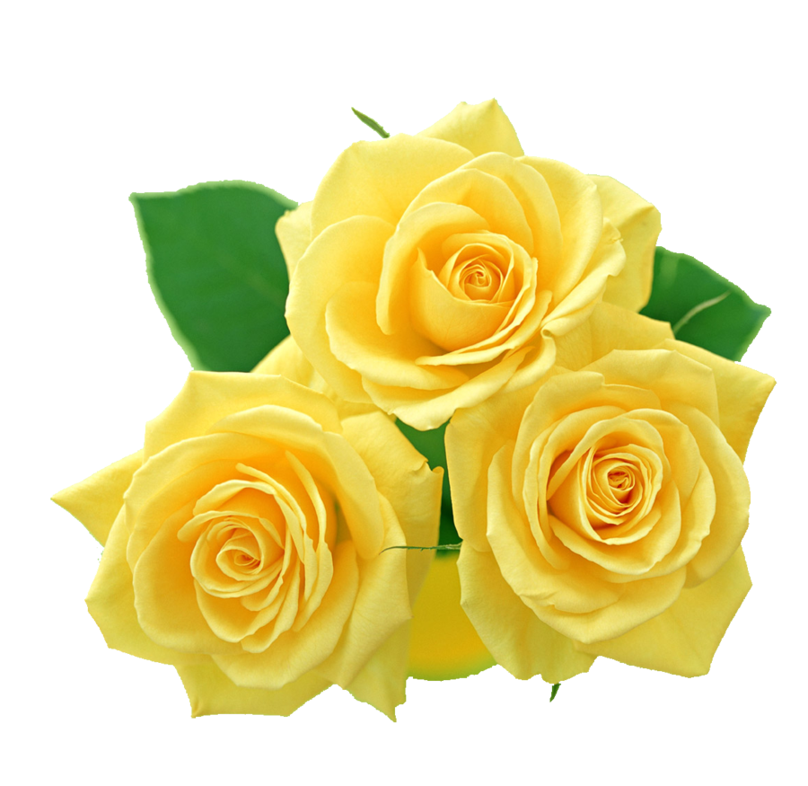 By Margrett Meidinger PC.83: Yellow Rose Pics&Pics