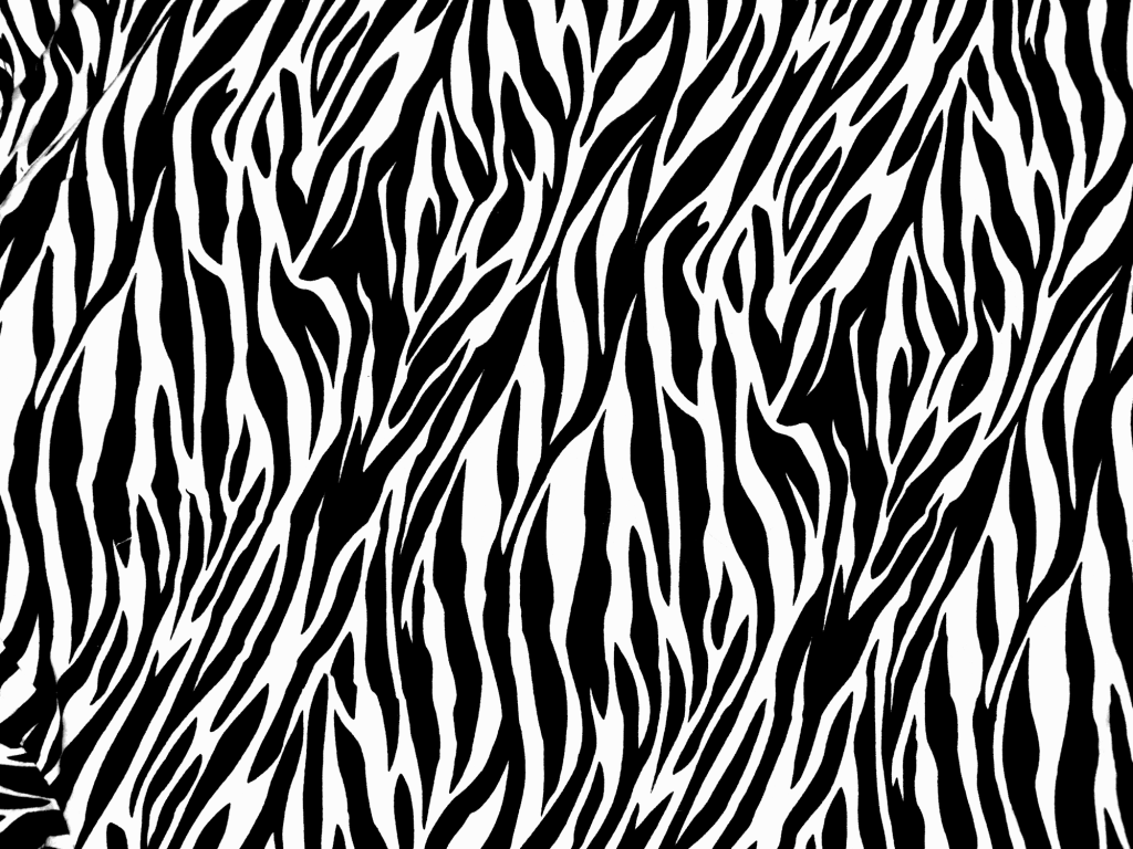 Full HD Zebra Photos 0.39 Mb, BsnSCB