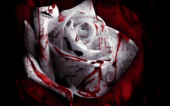 Image: Wallpaper-Blood-KFU79.jpg