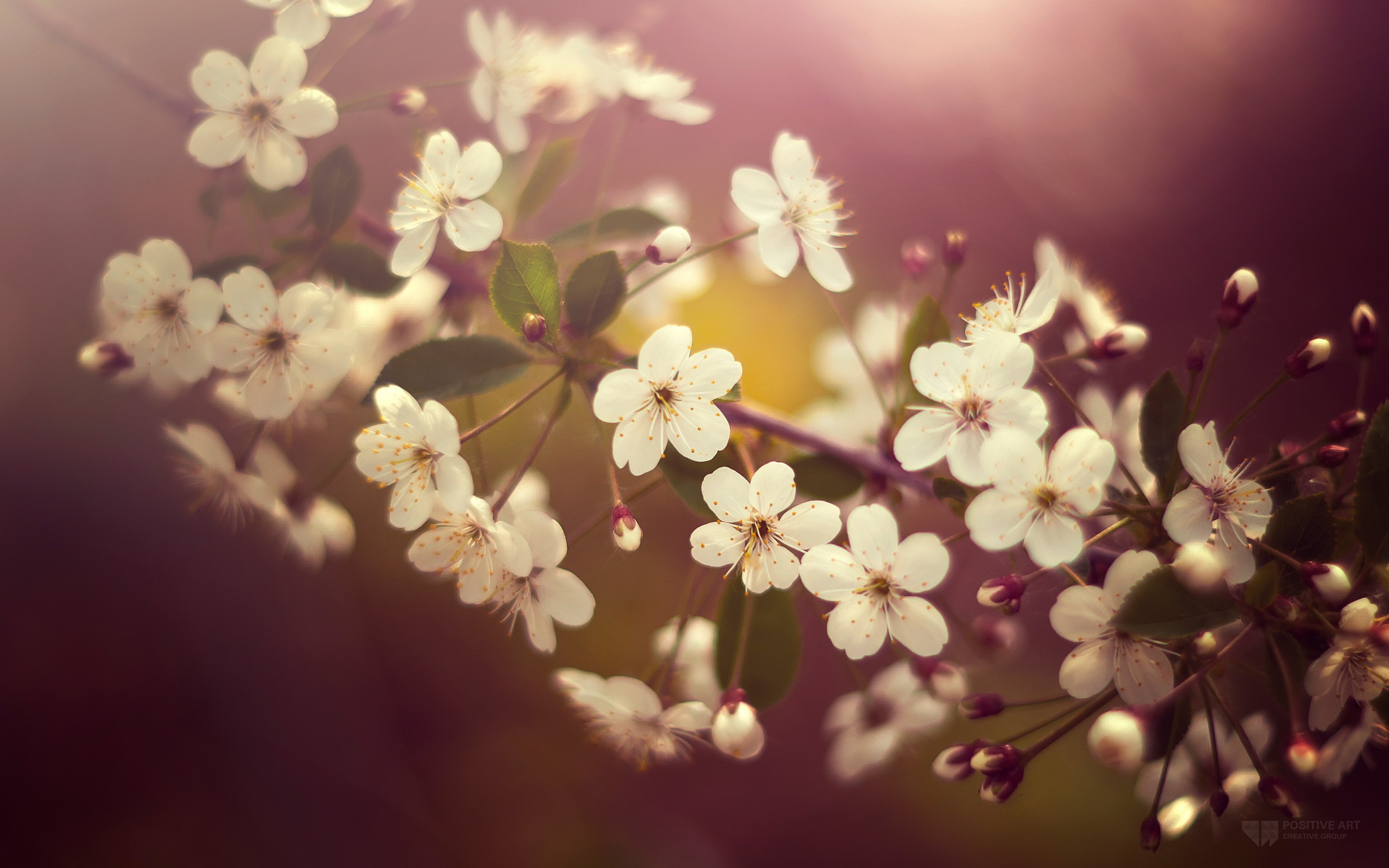 2560x1600 px Nice HD Photos of Blossom, Full HD 1080p Desktop Photos for PC&Mac, Laptop, Tablet, Mobile Phone